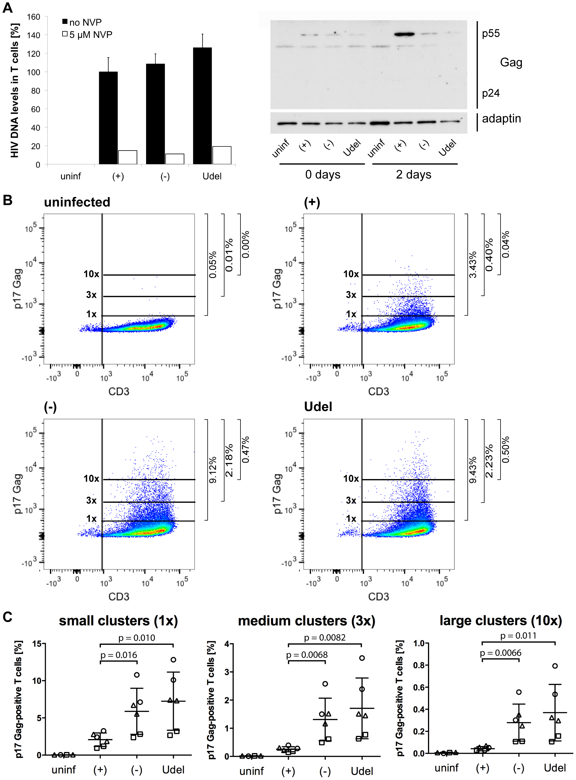 Tetherin promotes the transfer of infectious HIV clusters to T cells.