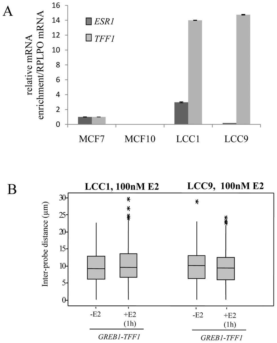<i>TFF1</i> and <i>GREB1</i> nuclear organisation in LCC1 and LCC9 cells.