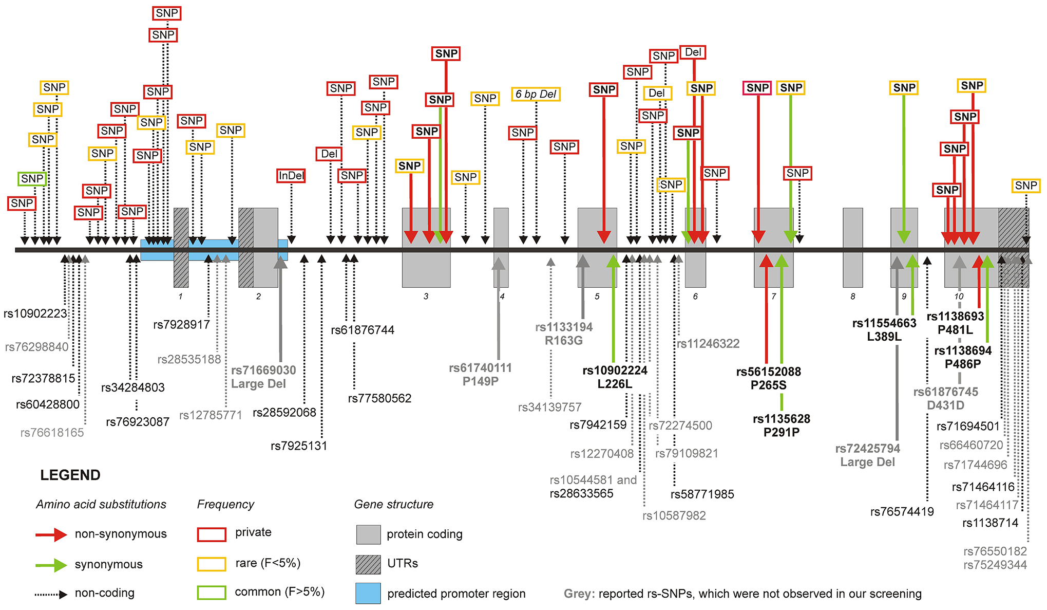 Frequency, type, and localization of all novel variants.