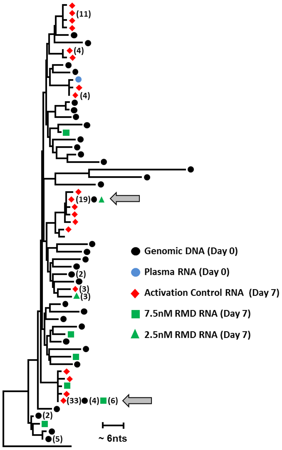 Phylogenetic analysis of HIV sequences expressed ex vivo following the latency reversal.