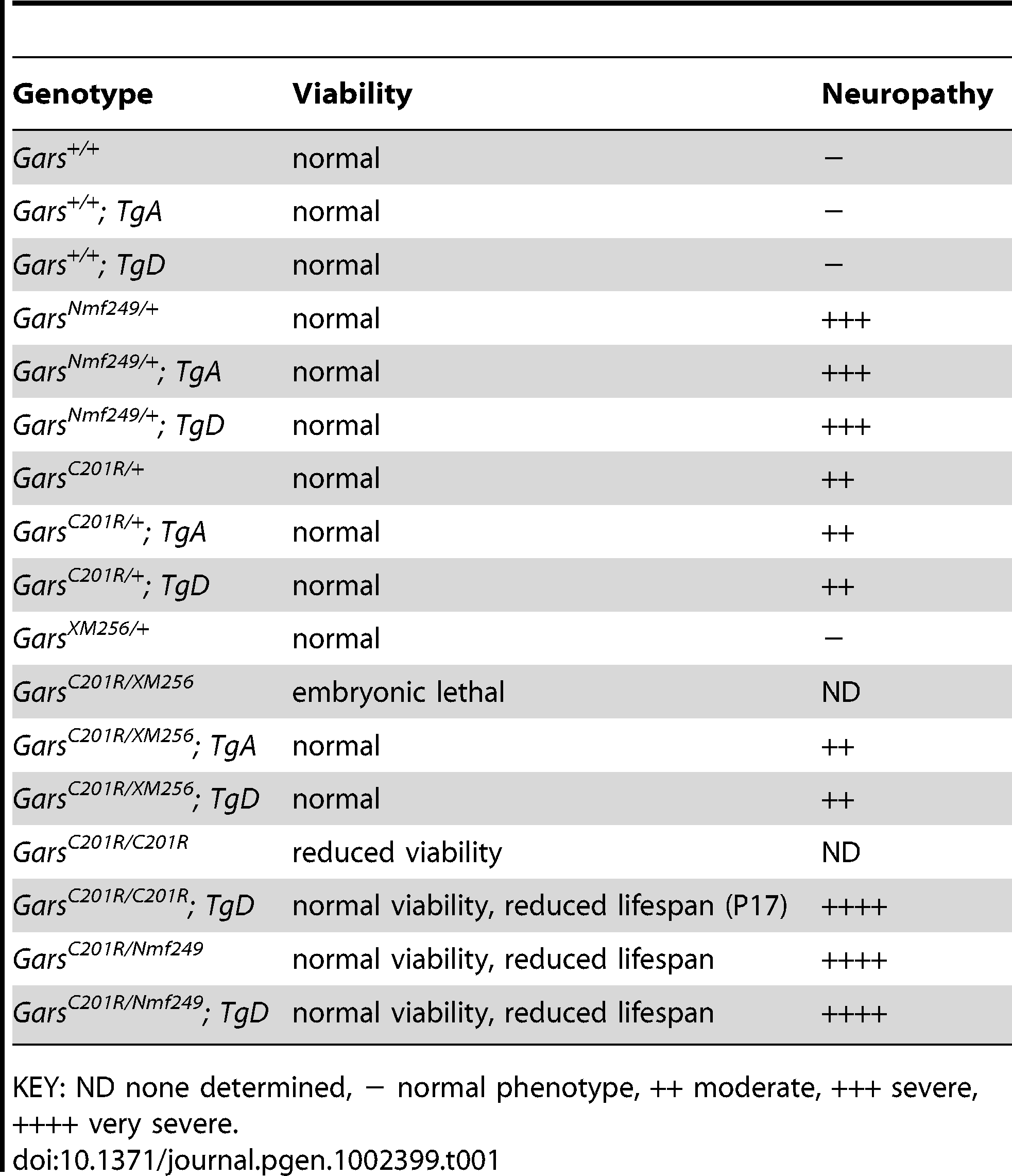 A summary of the genotypes of mice used in these studies indicating the viability and neuropathy phenotypes associated with each genotype.