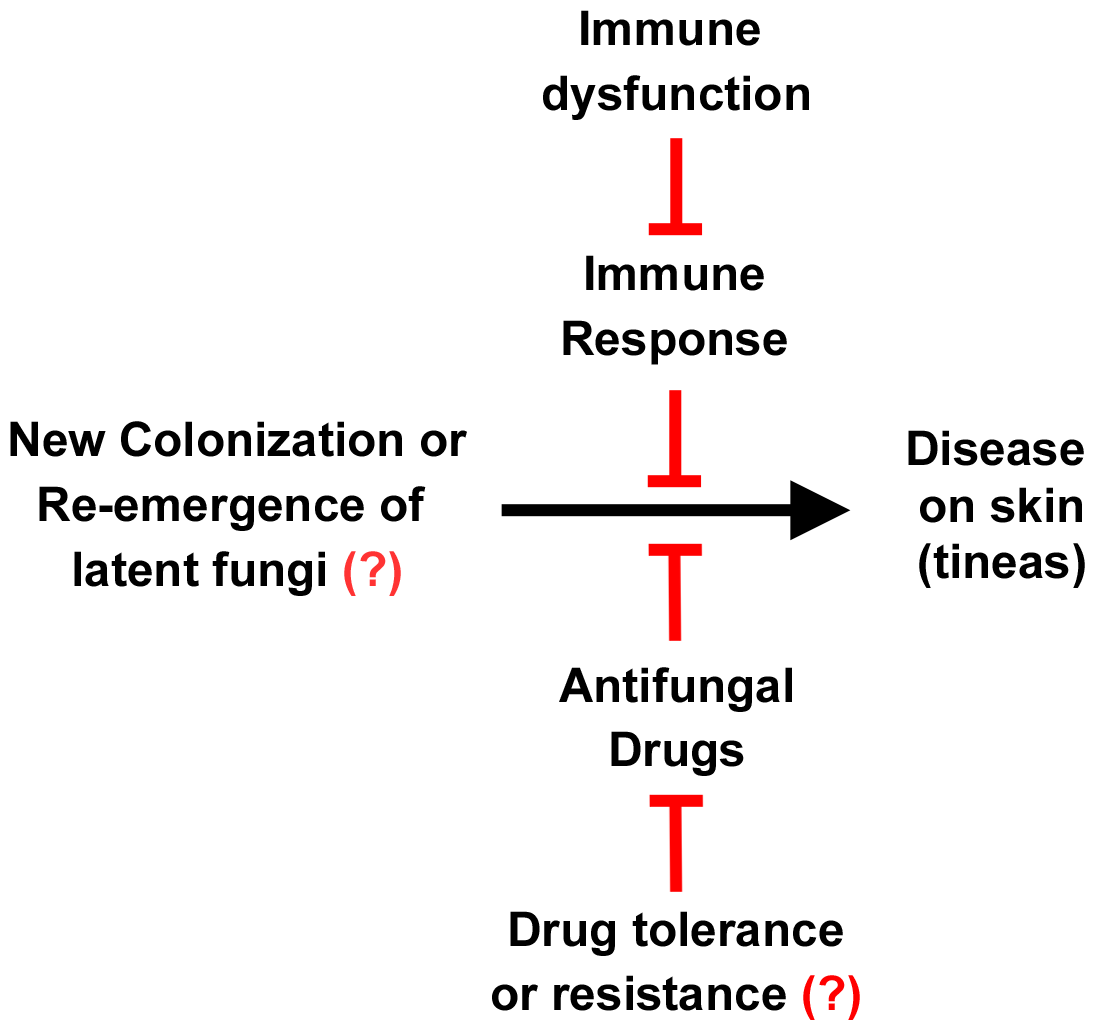 Relationship between fungus, disease, the immune system, and drugs.