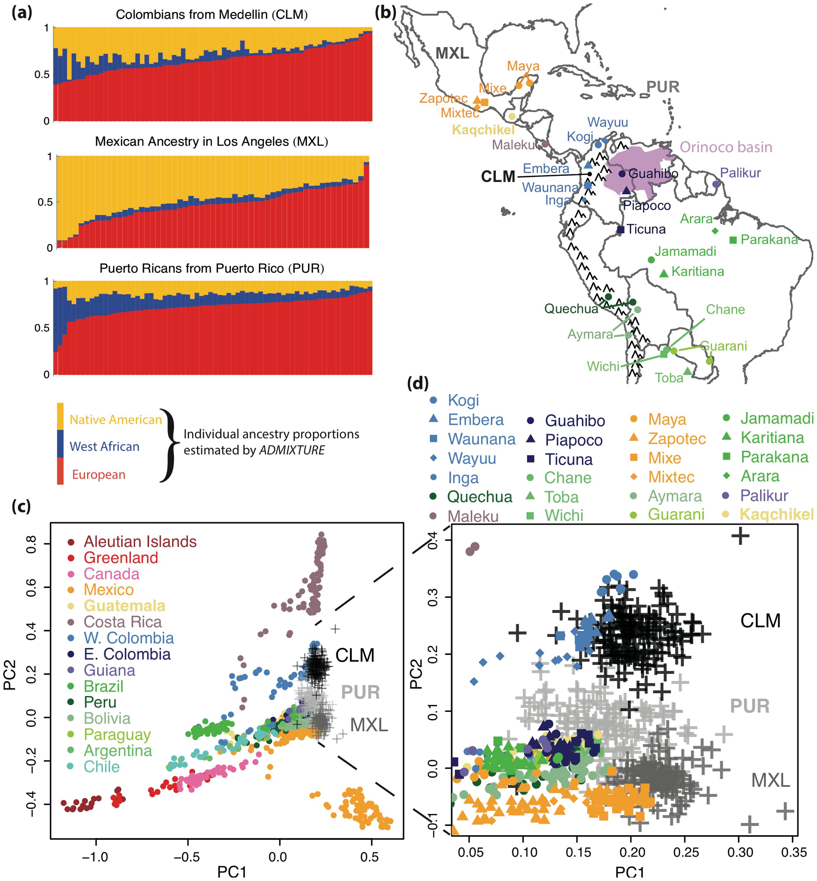 Genome-wide ancestry patterns.