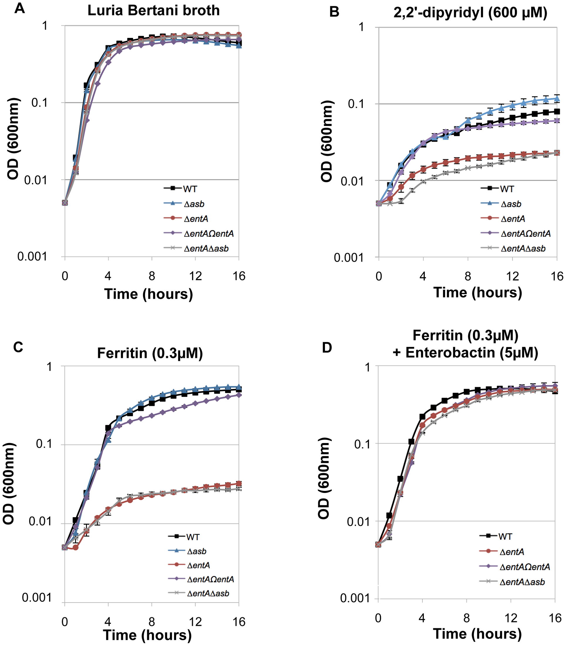 Iron acquisition from ferritin relies on bacillibactin production.