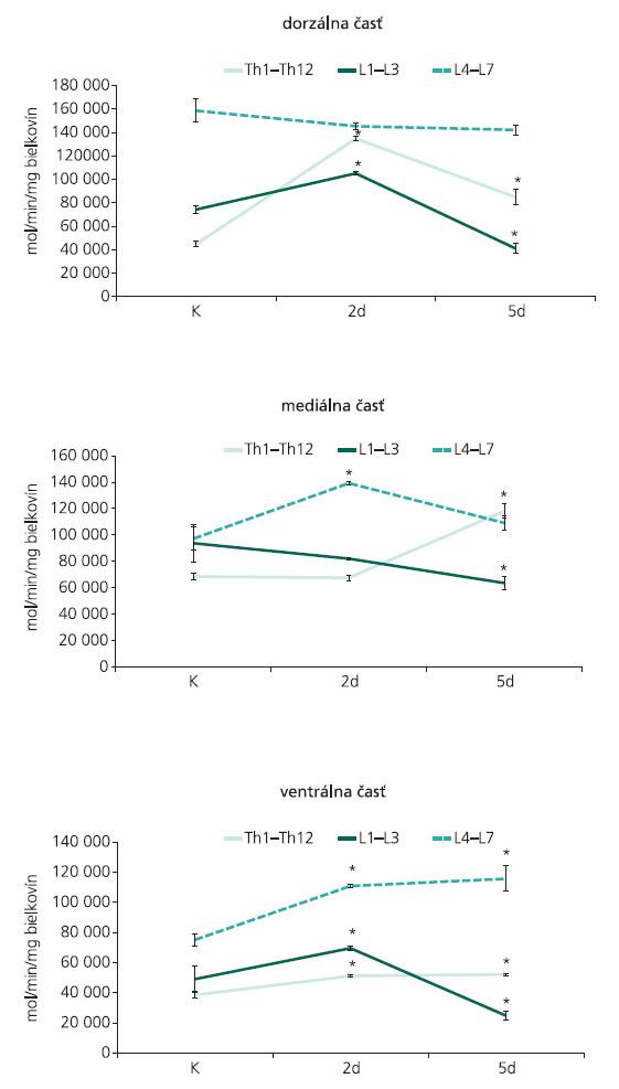 Aktivita kalciovo-závislej syntázy oxidu dusnatého, zaznamenaná v dorzálnej (A), mediálnej (B) a ventrálnej (C) časti torakálnych (Th1–Th13), horných lumbálnych (L1–L3) a dolných lumbálnych (L4–L7) segmentov miechy u kontroly a 2 a 5 dni po navodení 4-násobnej konstrikcie cauda equina. Výsledky sú vyjadrené v mol/min/mg bielkovín, predstavujú aritmetický priemer (n = 3) ± SEM; *p < 0.05 v porovnaní s kontrolou.