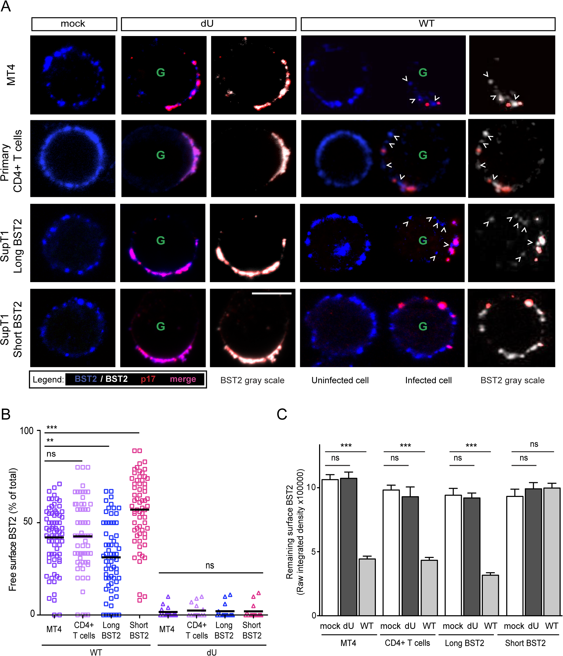 Residual BST2 clusters are detected outside virus assembly sites in the presence of Vpu.