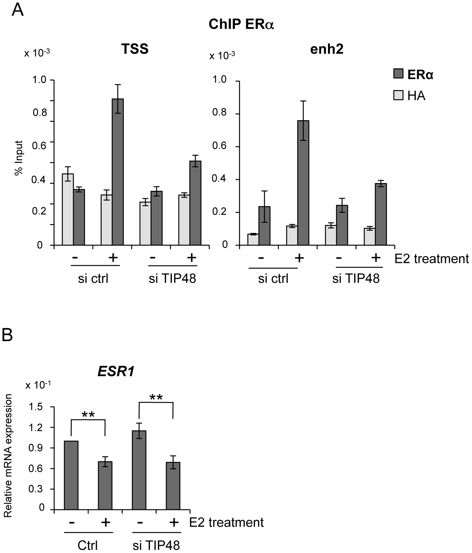 TIP48 is required for ERα binding during E2 activated transcription.