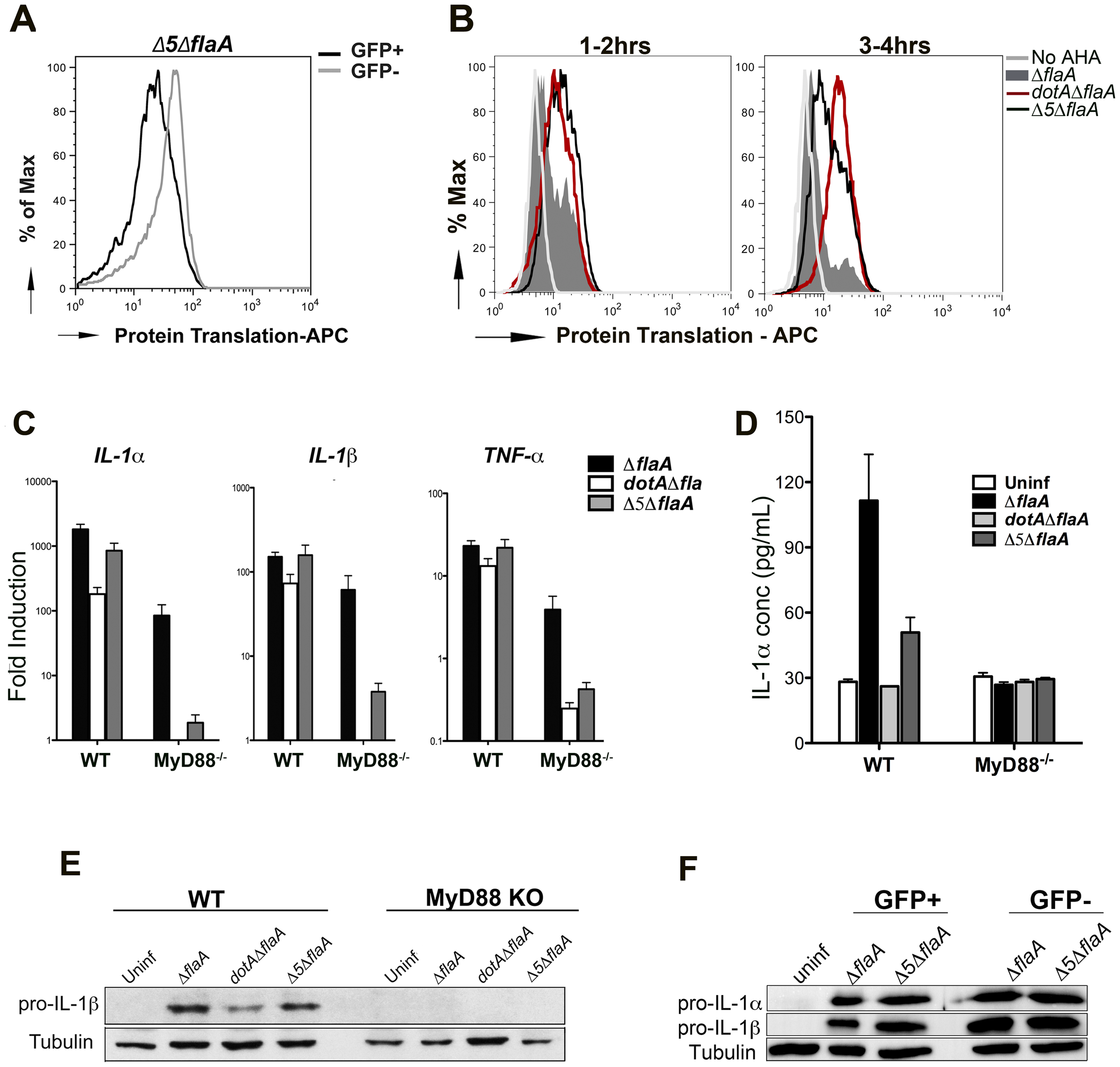 Production of the pro-inflammatory cytokines IL-1α and IL-1β is independent of the five translocated protein synthesis inhibitors
