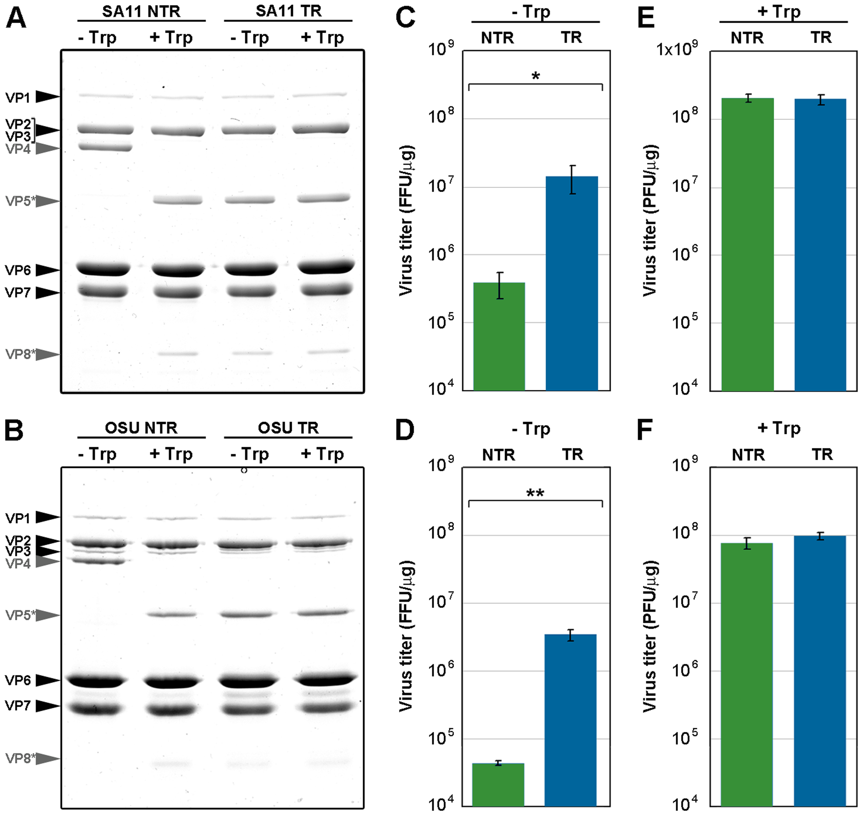 Infectivity assay of <i>in vitro</i> trypsin-treated TLP.