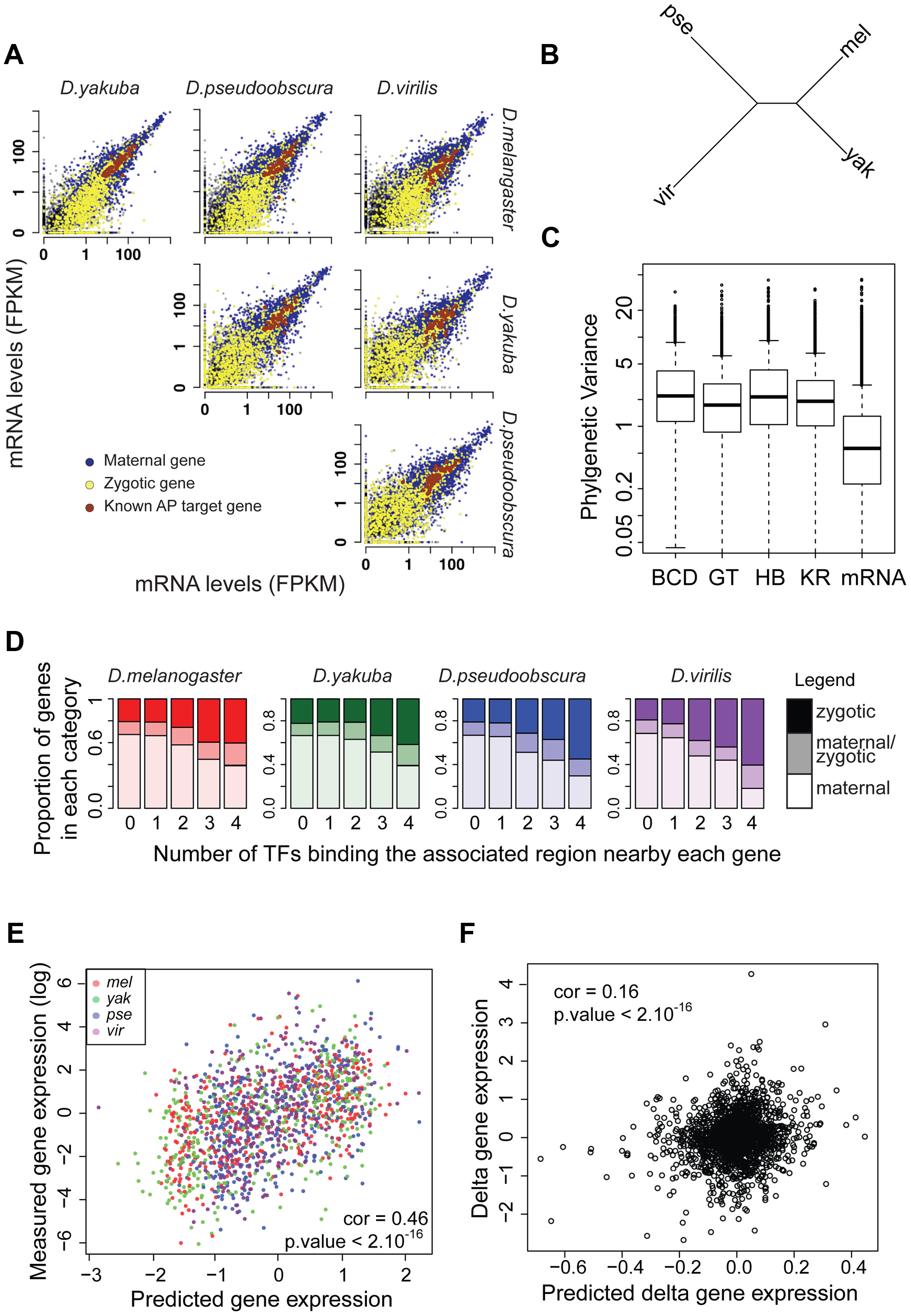 mRNA levels are highly conserved despite high divergence of BCD, GT, HB and KR binding.