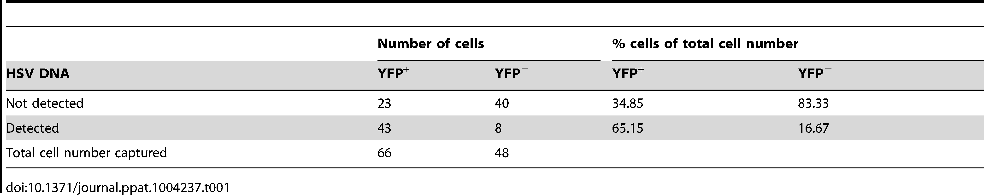 Number and percentage of YFP<sup>+</sup> and YFP<sup>−</sup> cells containing HSV DNA.