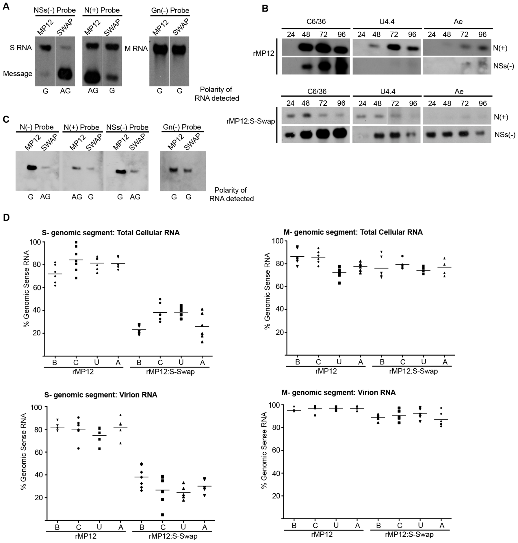 Analysis of viral RNAs. A. Intracellular RNAs in infected BHK-21 cells.