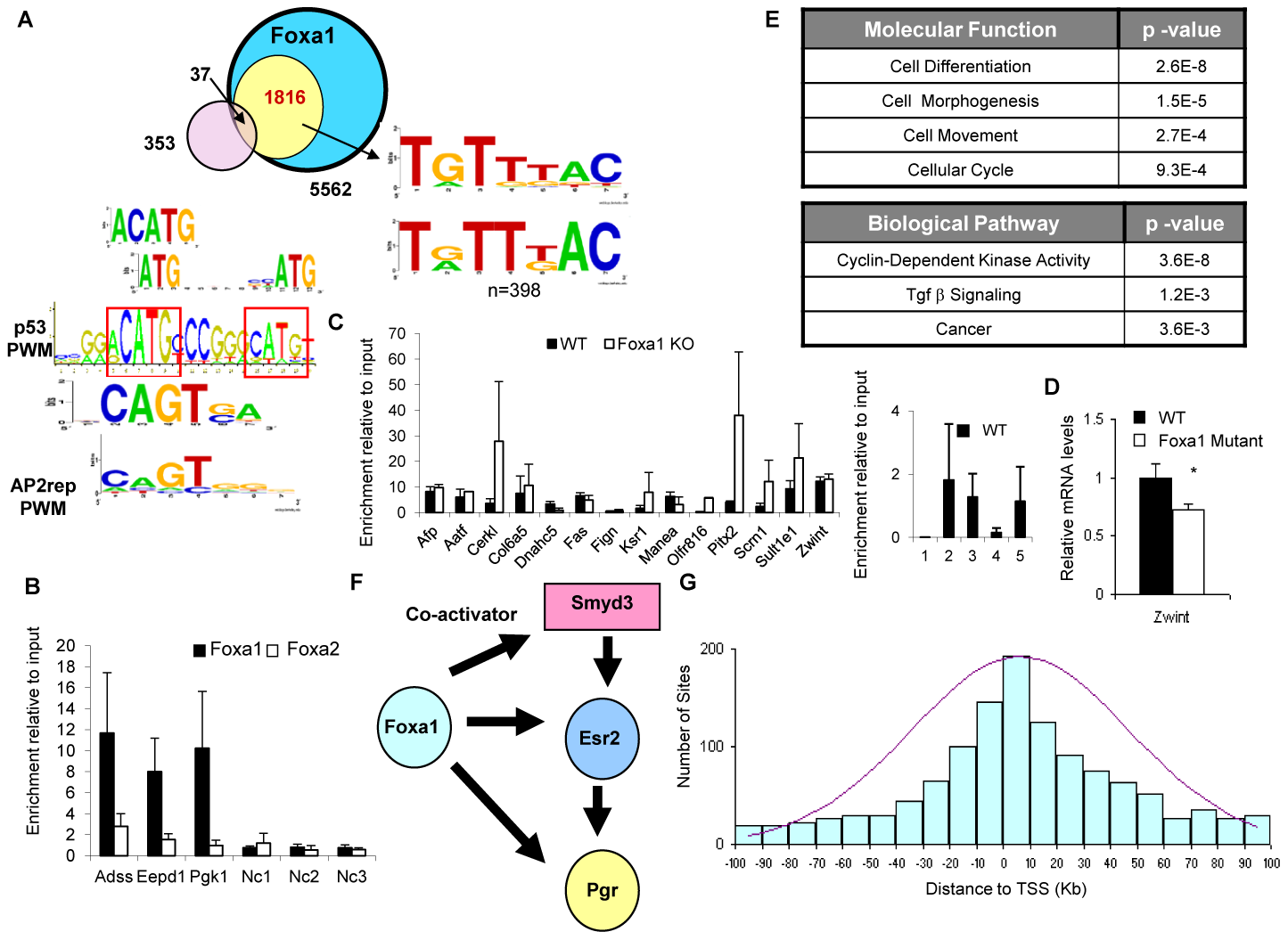 Foxa1-Specific Targets Are Enriched for p53 Binding Sites.