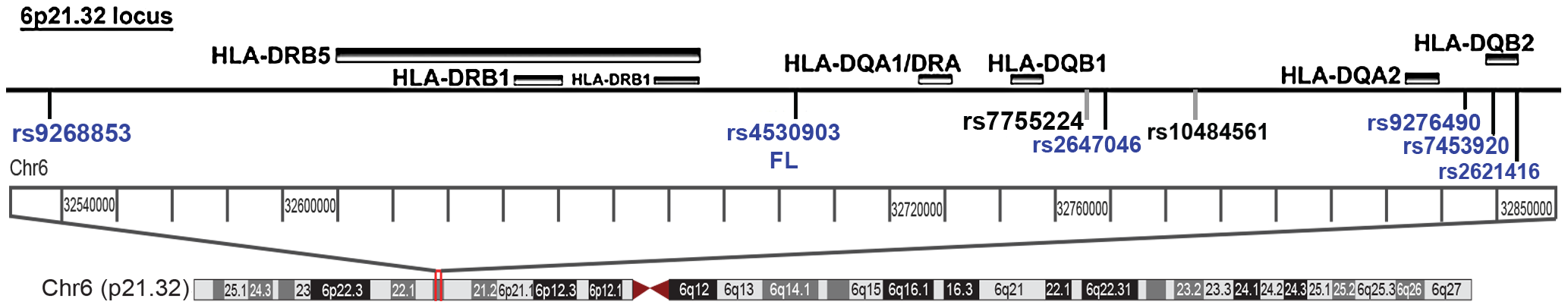 The Chr6p21.32 locus depicting the novel loci near the HLA II locus.
