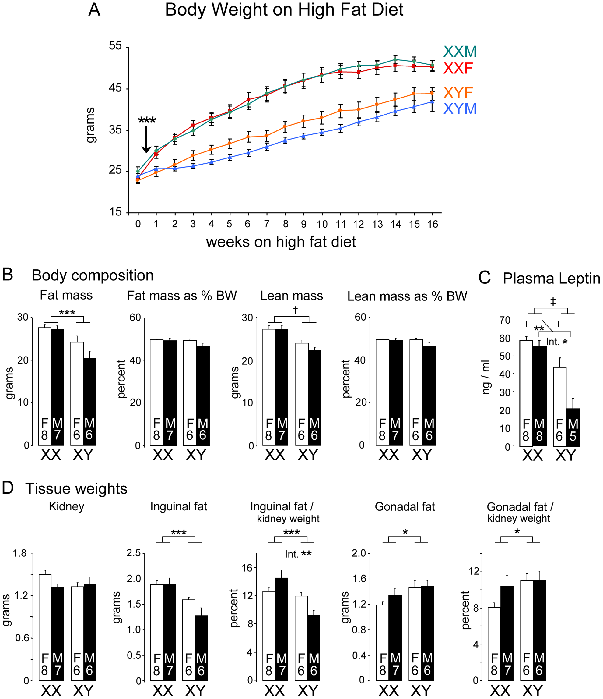 Enhanced weight gain and fat mass in XX compared to XY mice fed a high fat-high carbohydrate diet.