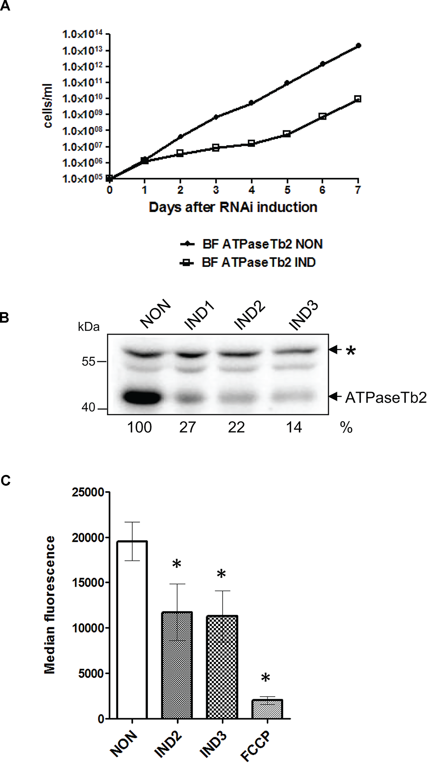 RNAi silencing of ATPaseTb2 inhibits the growth and mt membrane potential of BF <i>T</i>. <i>brucei</i>.