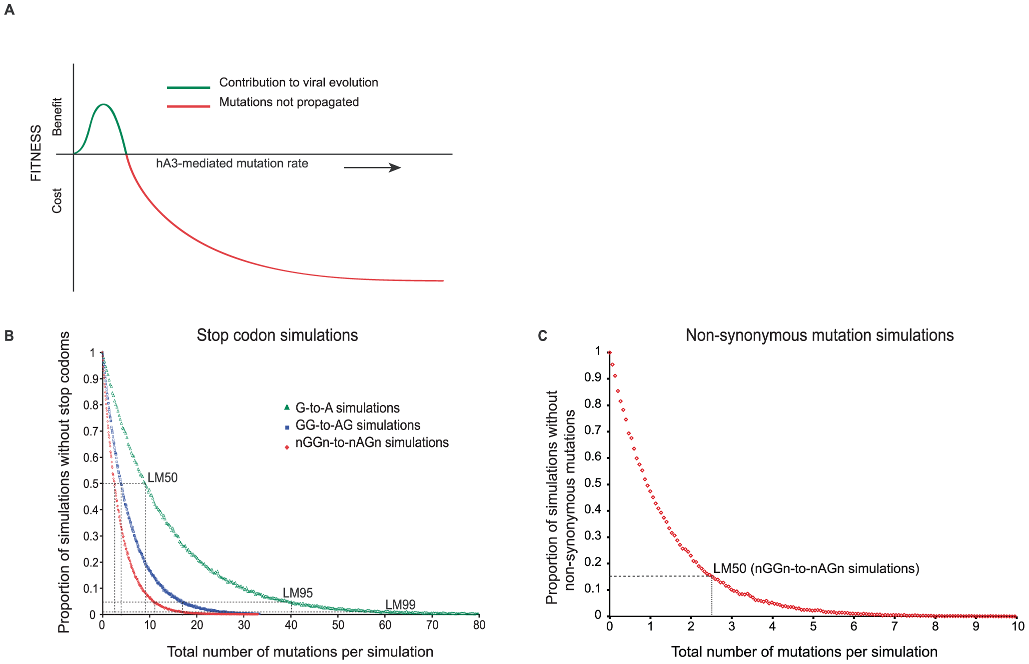 <i>In silico</i> simulation of hA3G-induced mutation in HIV(IIIB) open reading frames.