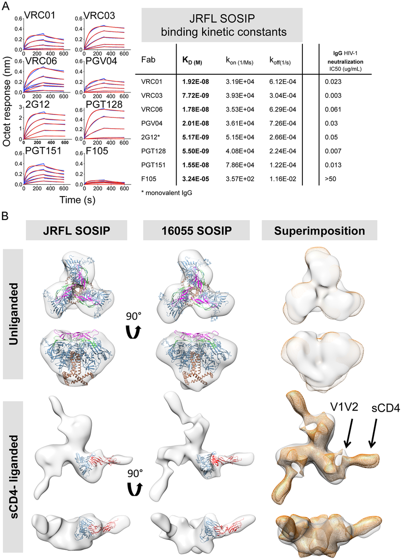 Kinetic measurements and EM 3D reconstructions of unliganded and sCD4-liganded SOSIP trimers.