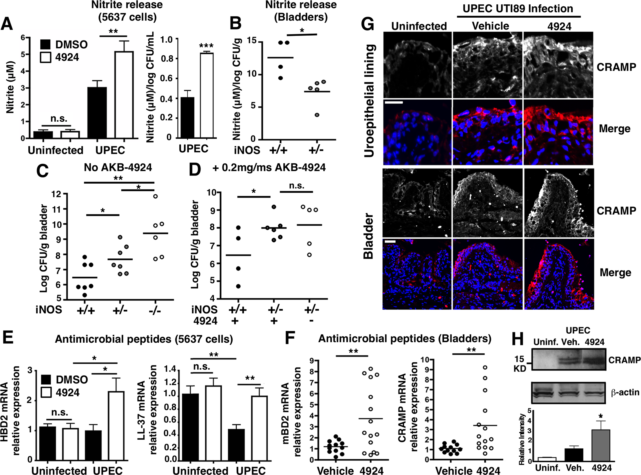 AKB-4924 pretreatment enhances production of nitric oxide and host defense peptides during UPEC infection.