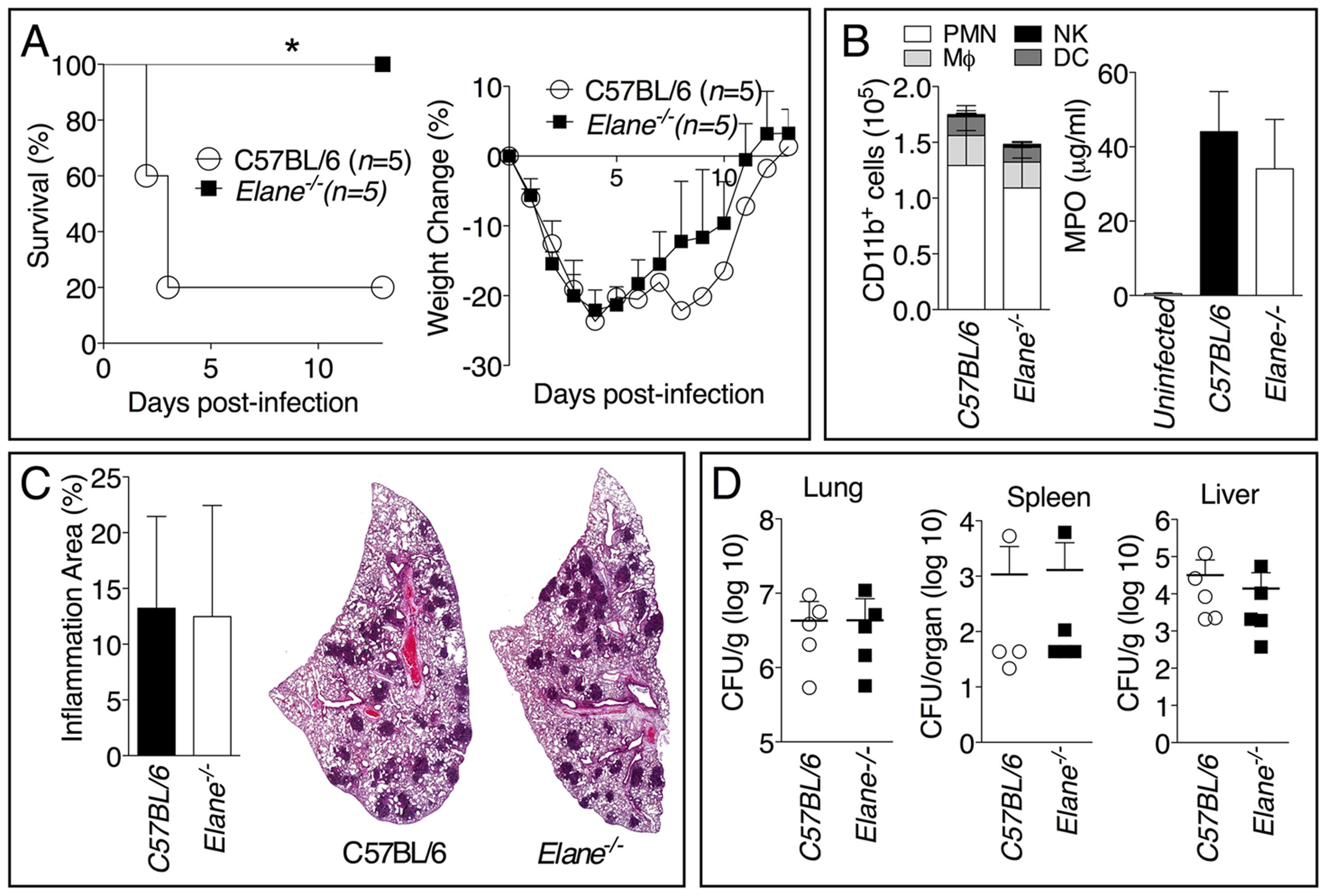 Neutrophil elastase reduces host tolerance to infection with <i>B. pseudomallei</i>.