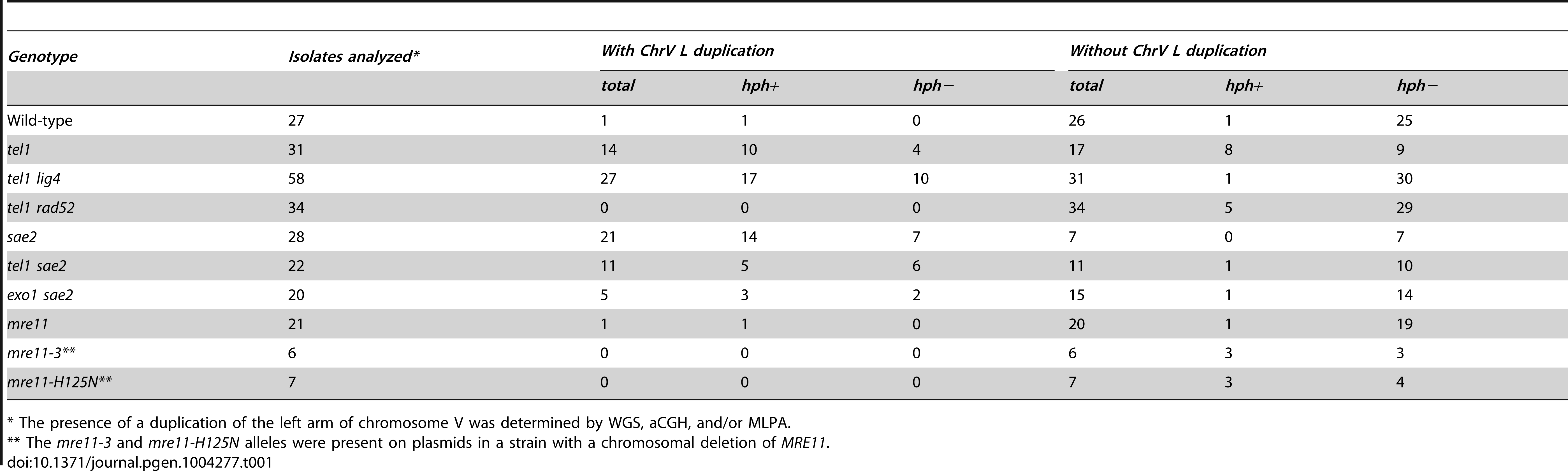 Count of GCR events with and without duplication of the left arm of chromosome V from the uGCR assay.
