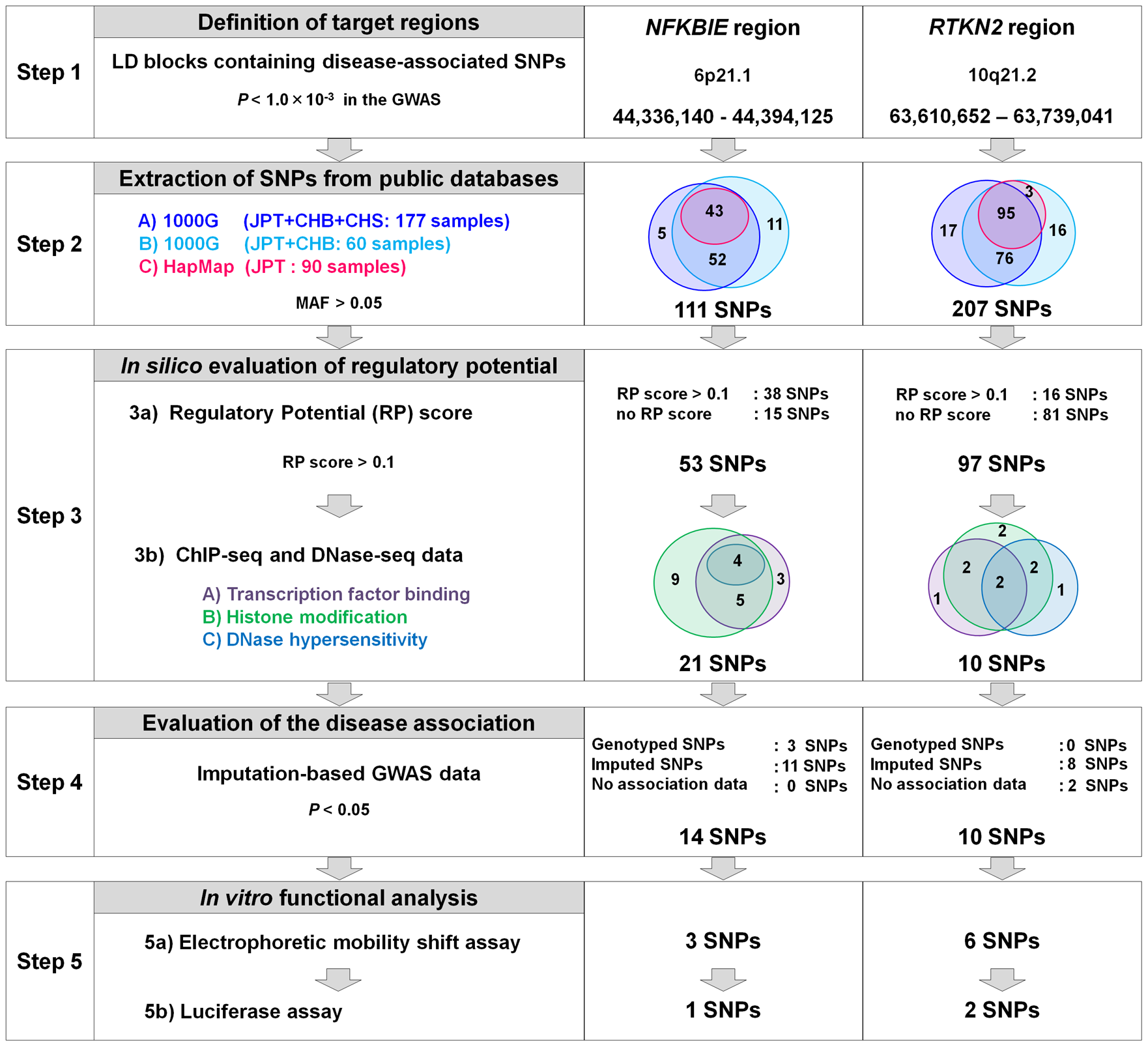 Overview of SNP selection using integrated <i>in silico</i> and <i>in vitro</i> approaches.