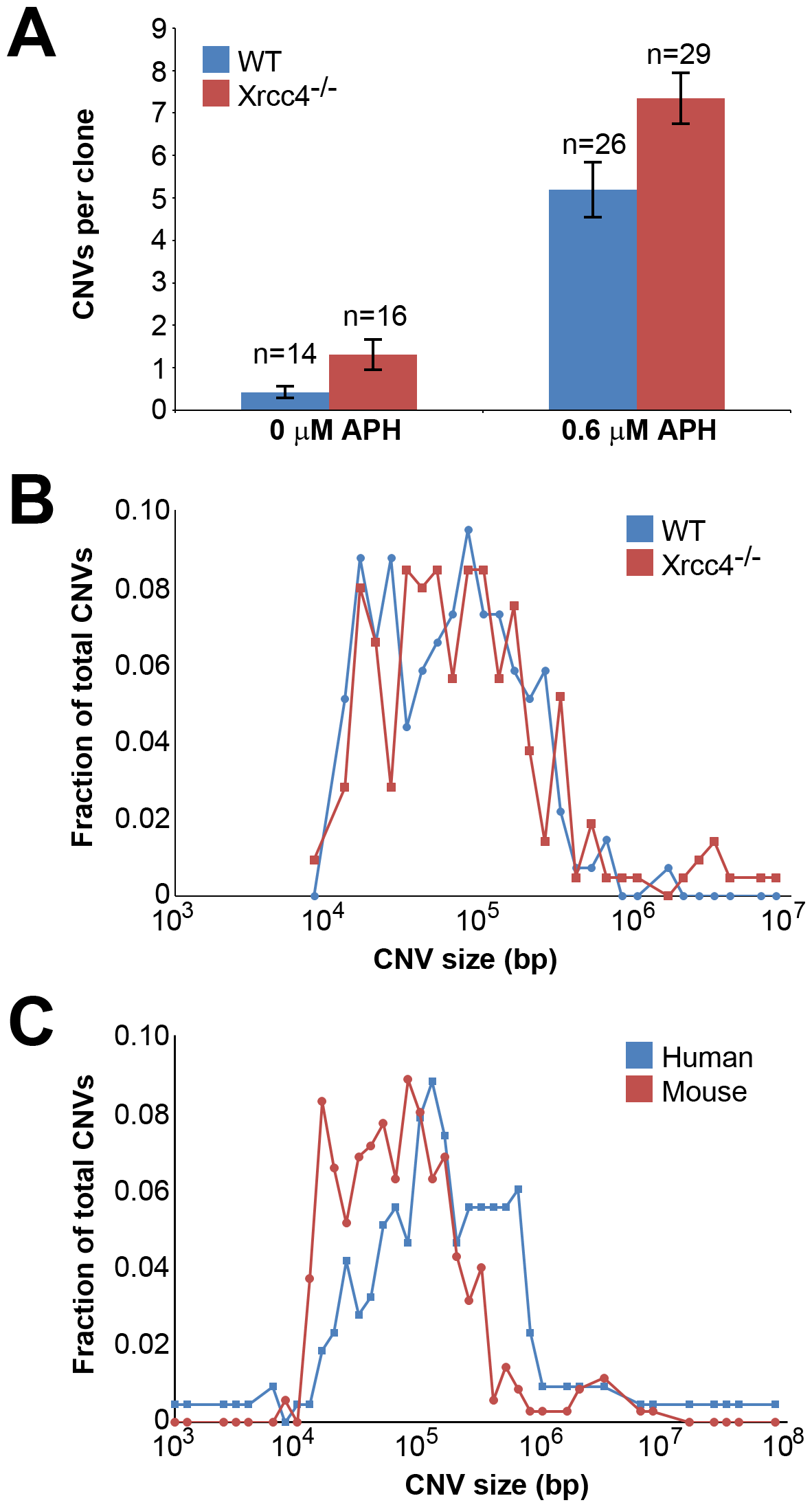 Replication stress induces CNVs in mouse ES cells.