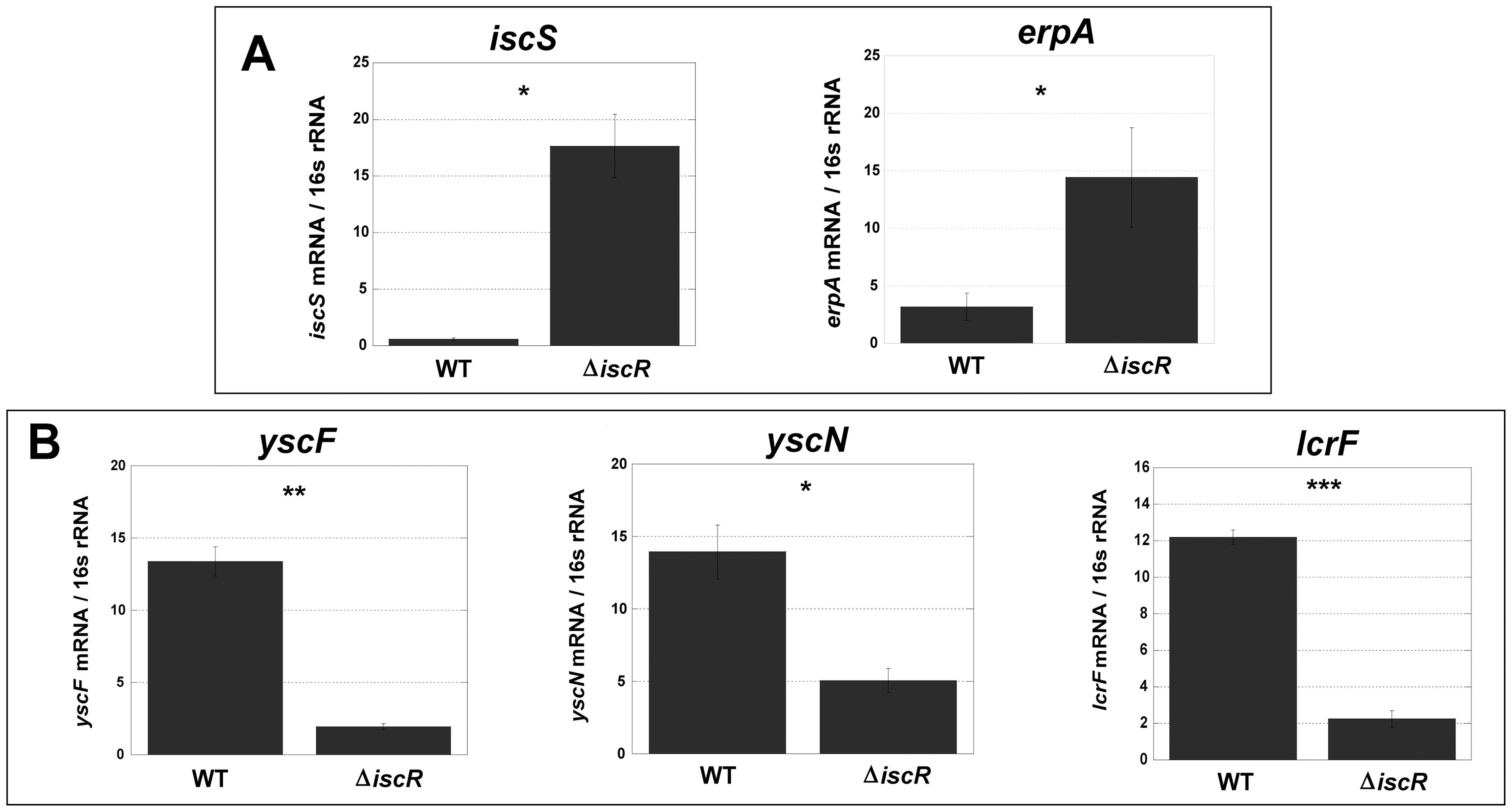 Deletion of IscR leads to increased transcription of Fe-S cluster biogenesis genes and robust transcription of T3SS genes.