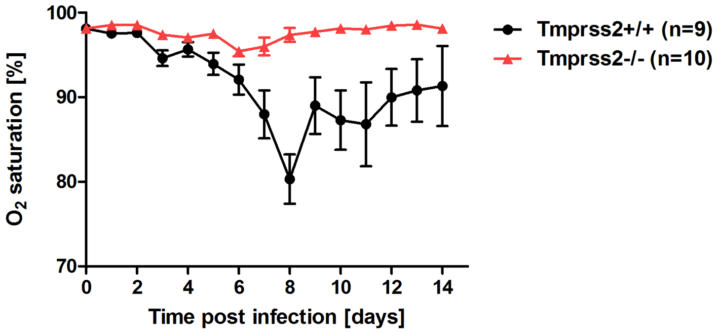 <i>Tmprss2<sup>−/−</sup></i> mutant mice do not exhibit drop in blood oxygen saturation.
