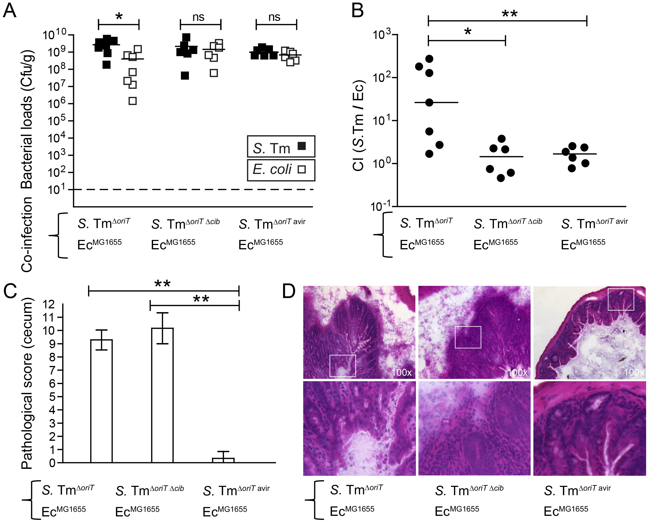 """Colicin-dependent competition of <i>S.</i> Tm and <i>E. coli</i> in the gut in inflammation-induced """"blooms"""" in gnotobiotic LCM mice."""