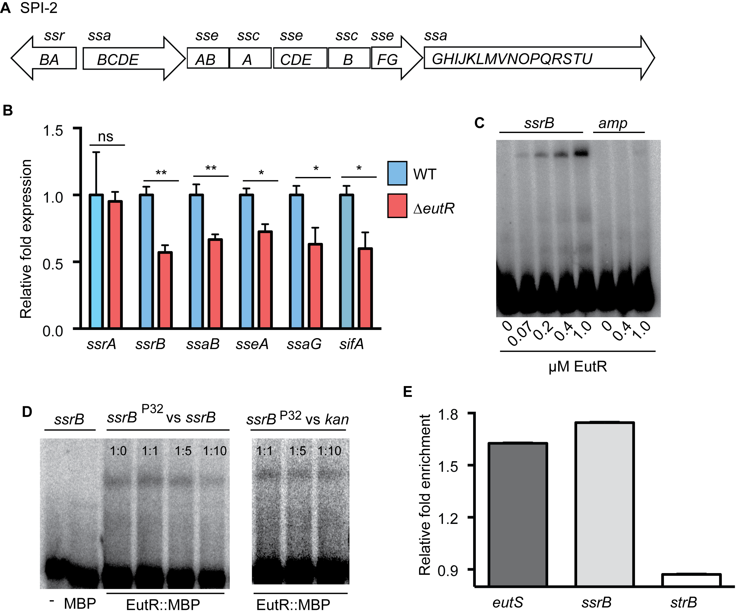 EutR regulates SPI-2 expression.