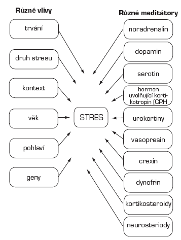 Ovlivnění a mediátory stresu (15)