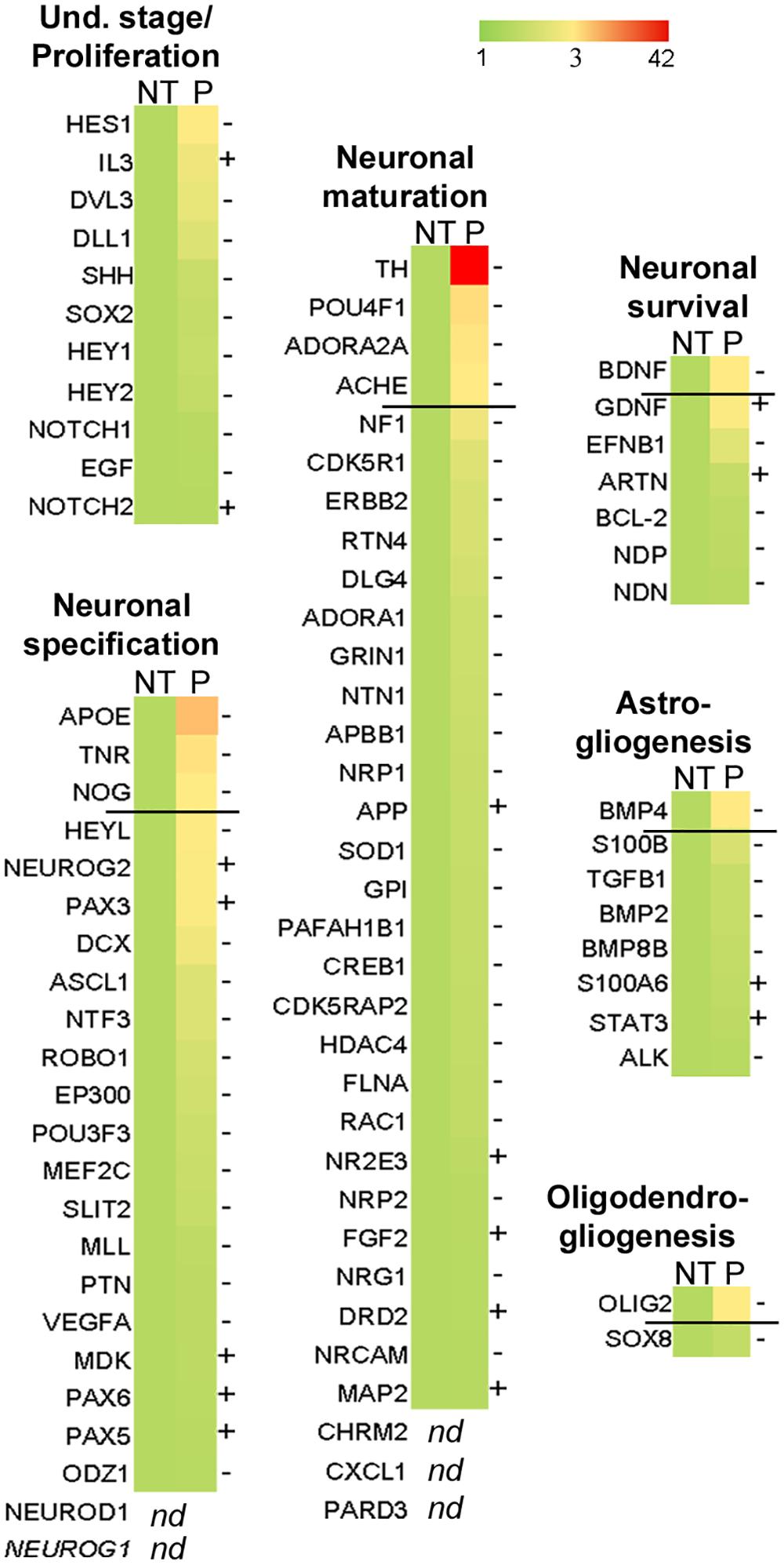 <i>bdv-p</i> alters the molecular program involved in neurogenesis.