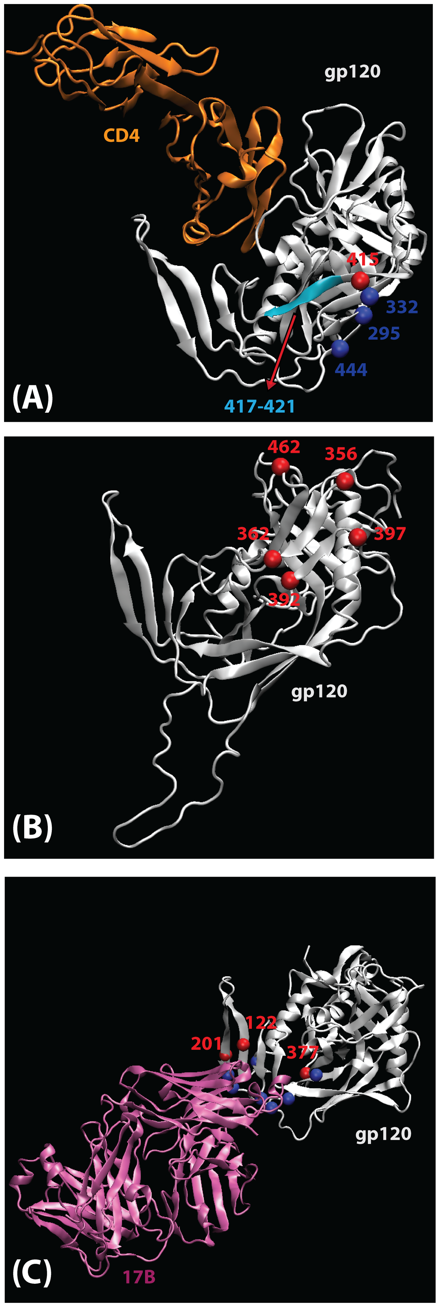 Mapping of signature sites (red) on the three-dimensional structure of gp120 (silver).