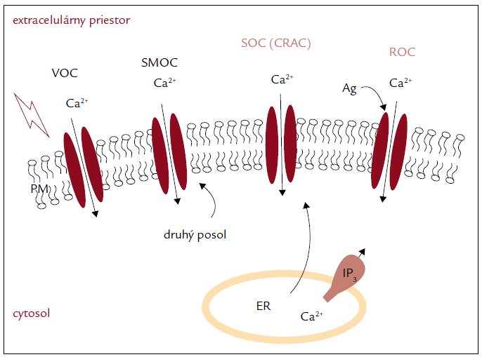 Vstup vápnika do bunky [6].