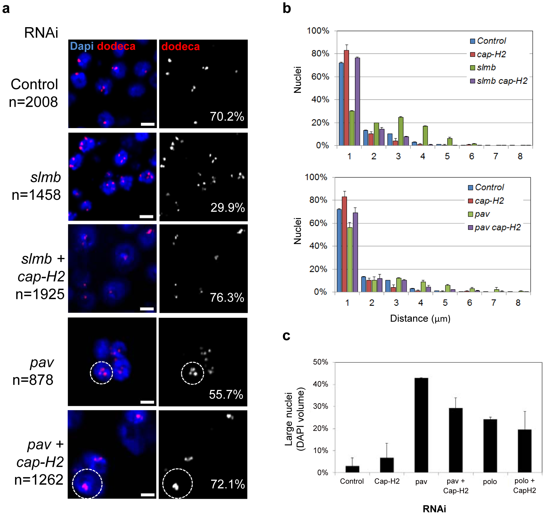RNAi of a subset of pairing promoters causes Cap-H2–dependent pairing disruption.