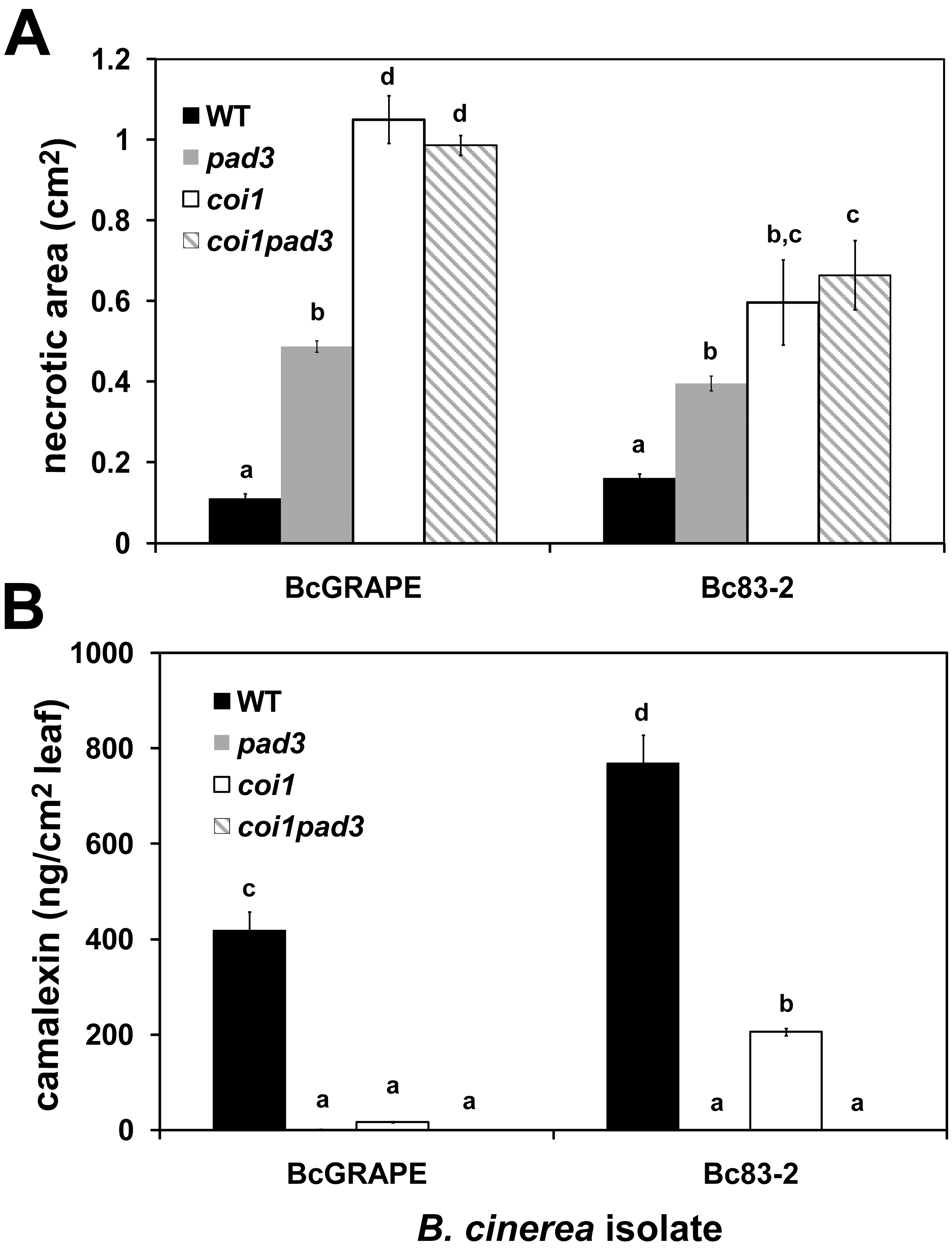Response to <i>B. cinerea</i> infection in jasmonate-insensitive and camalexin-deficient <i>A. thaliana</i>.