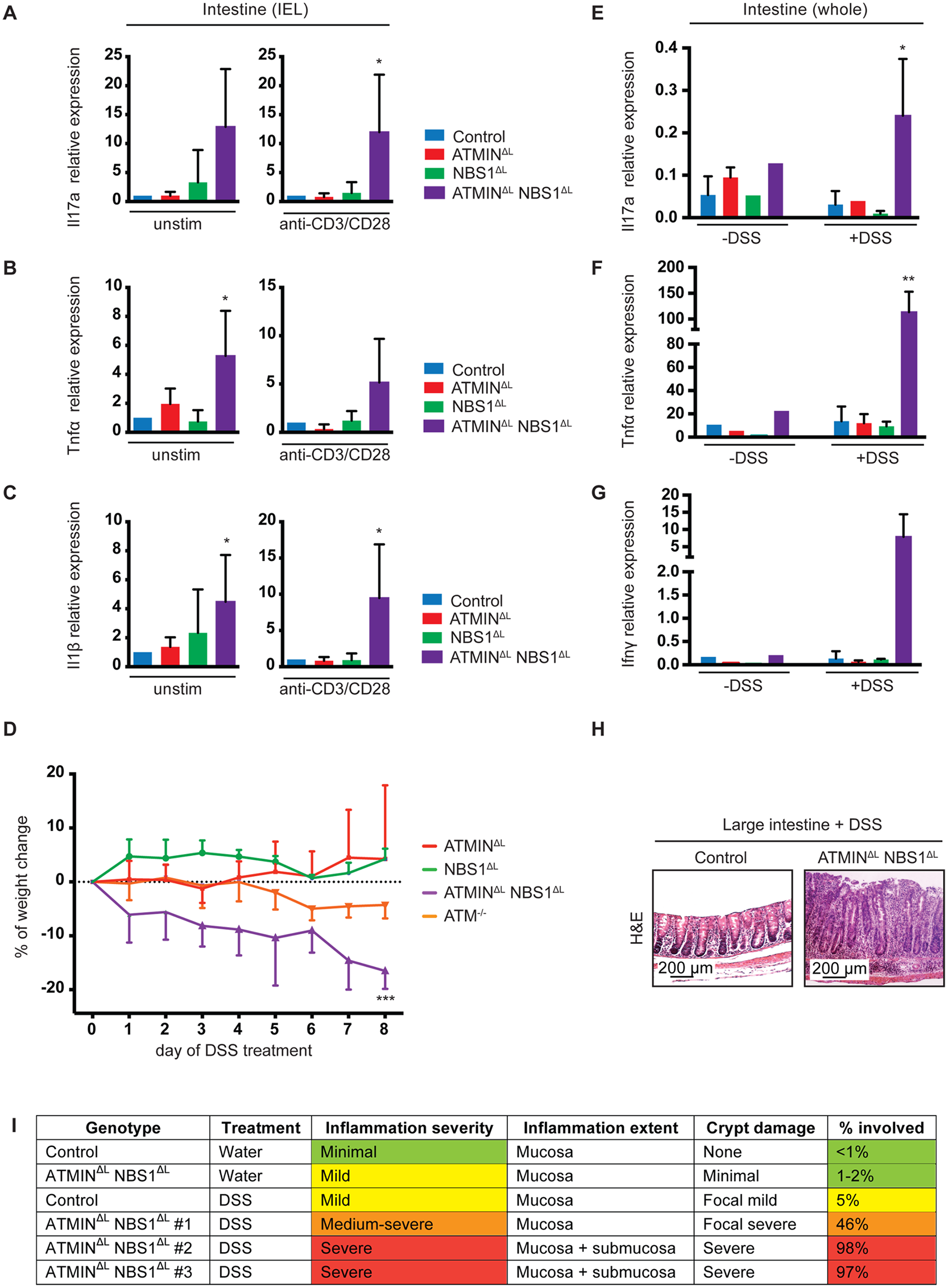 Mice deficient for ATMIN and NBS1 in T cells produce inflammatory cytokines in the intestine and are hypersensitive to colitis.