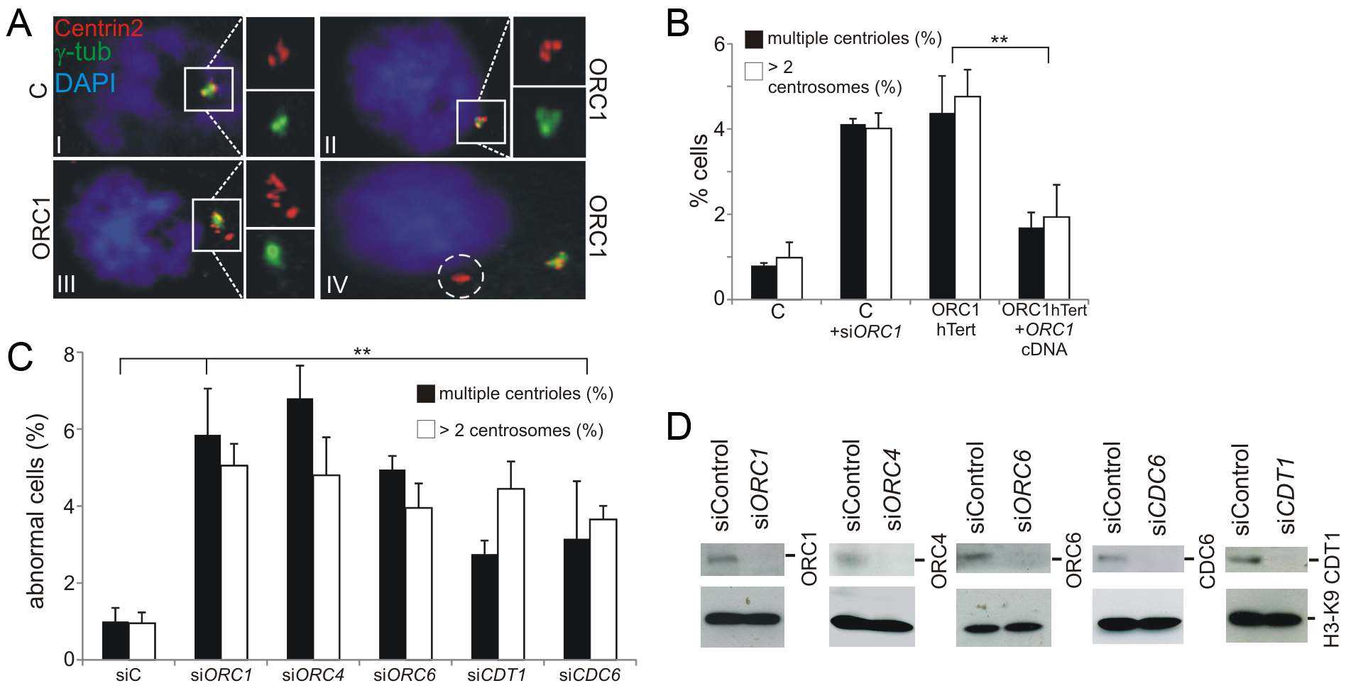 Deficiency in origin licensing proteins results in increased centrosome and centriole copy number.