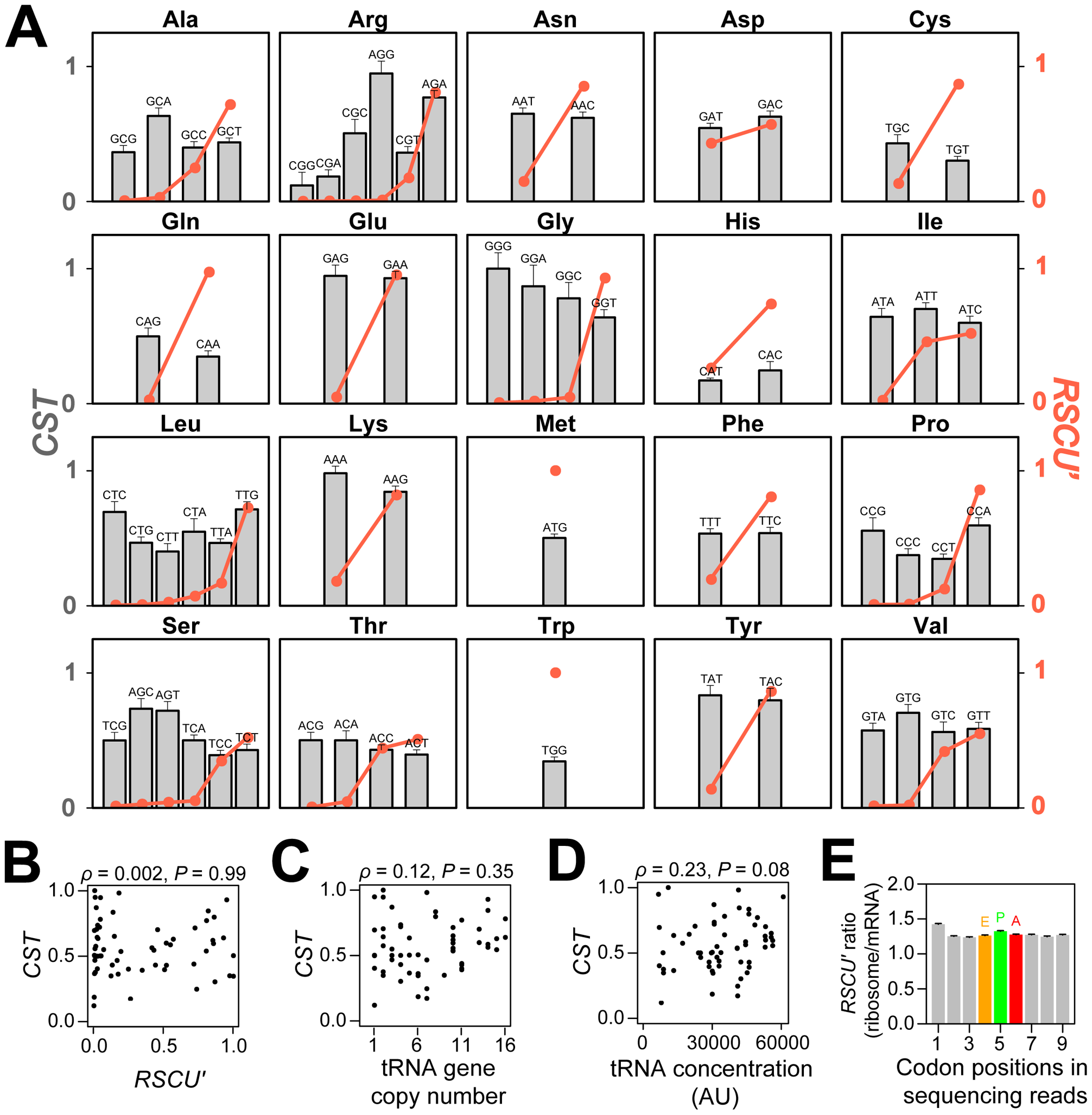 Relative codon selection times (<i>CST</i>s) in wild-type yeast cells in rich media.