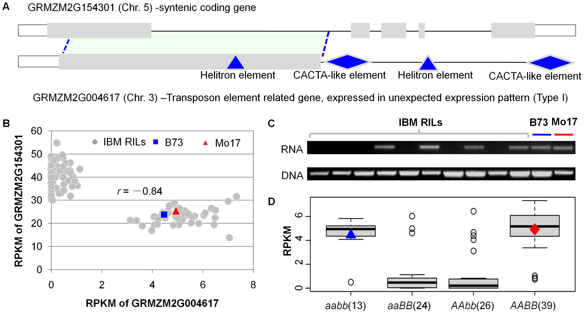 Co-expression complementary effect between a transposon-related gene and its ancestral syntenic gene.