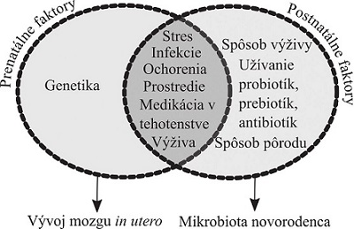 Vplyvy na os mikrobiota-črevo-mozog v perinatálnom období. Viaceré faktory ovplyvňujúce črevnú mikrobiotu matky môžu ovplyvniť vývoj mozgu in utero cez mikrobiálne metabolity, metabolity liečiv a zápalové zmeny. Postnatálne je črevná mikrobiota silno ovplyvnená spôsobom pôrodu a výživy (podľa Mayer a kol.<sup>4)</sup>)