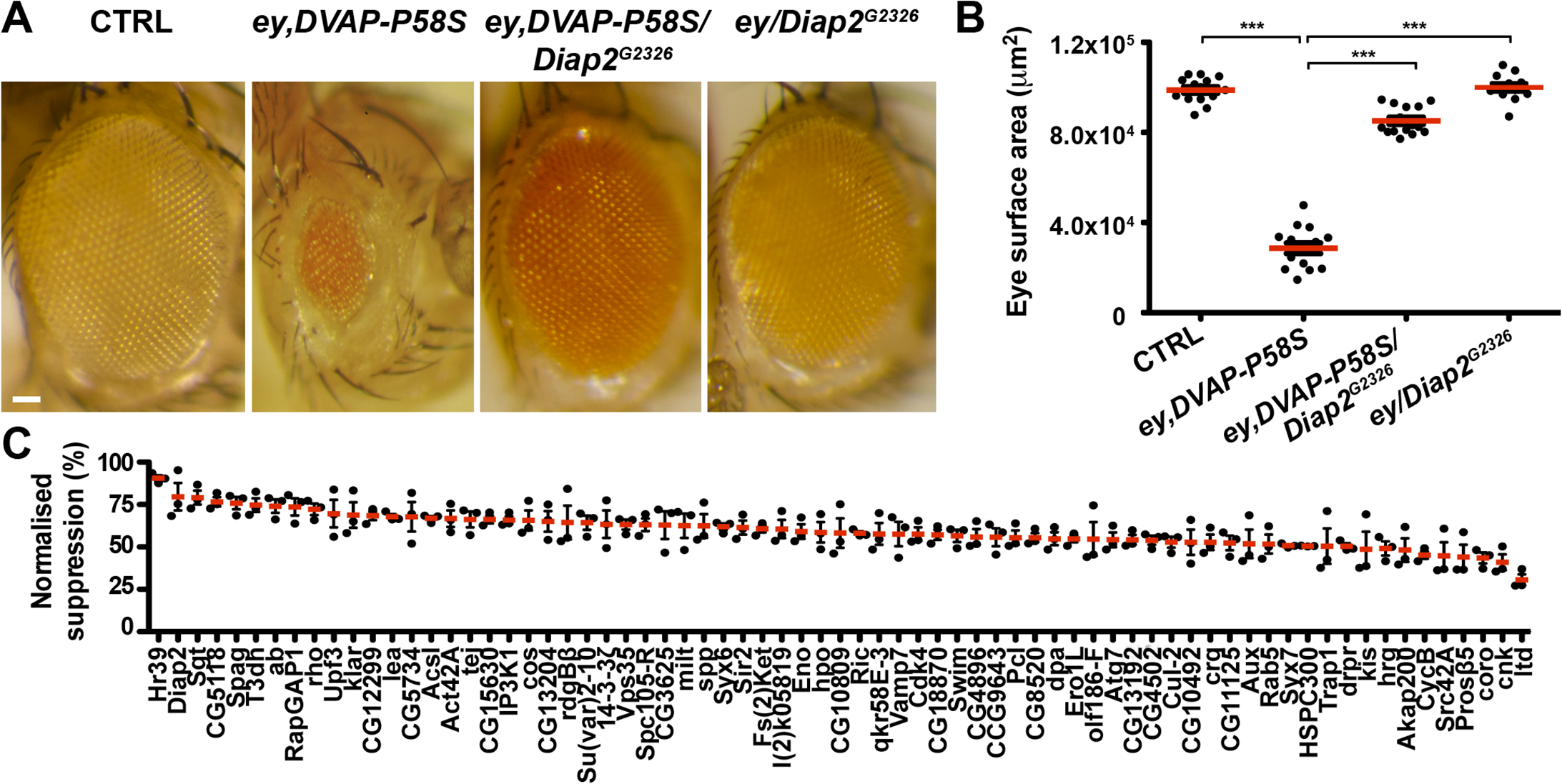 An overexpression screen for modifiers of the DVAP-P58S eye phenotype identified 71 suppressors.