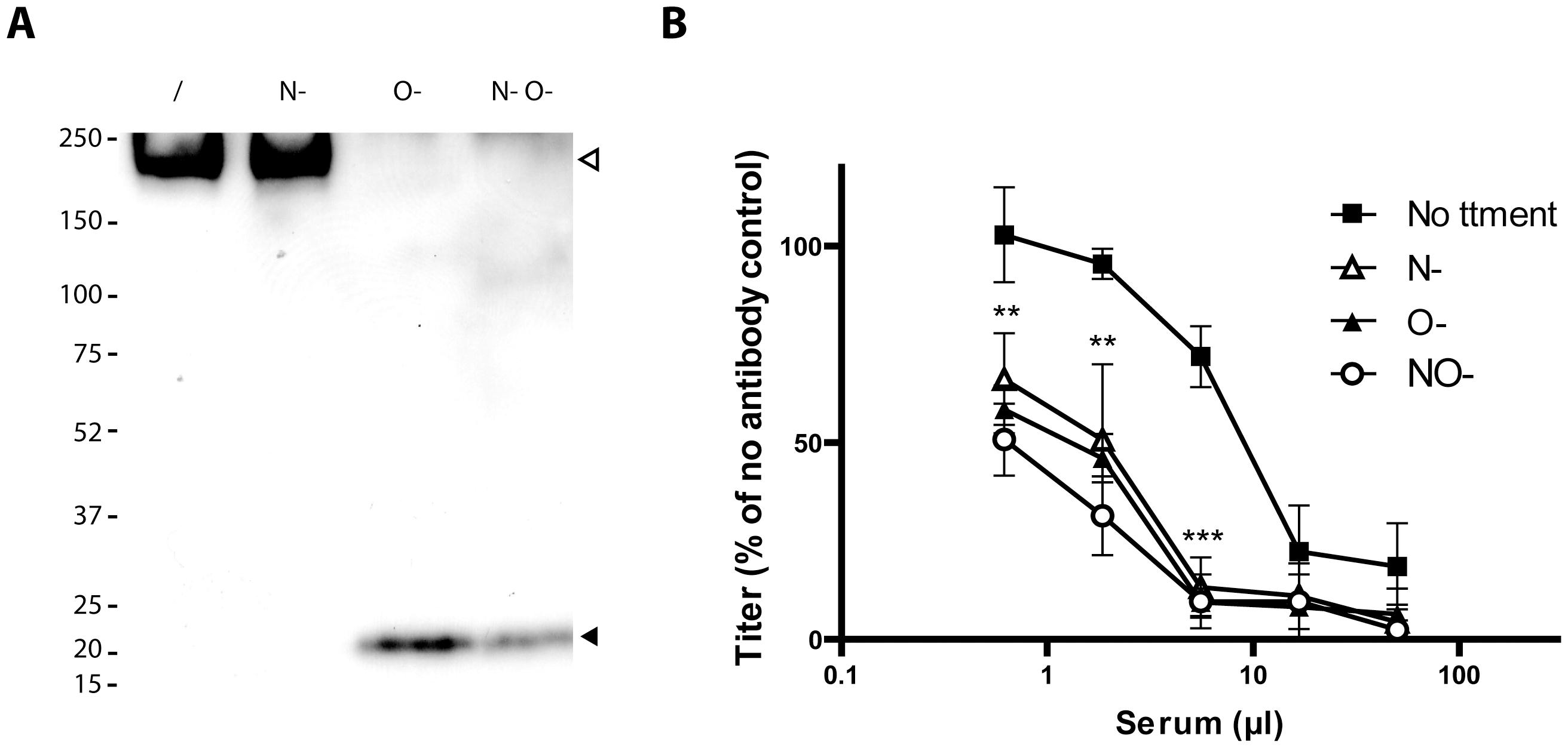 Glycosylation of BoHV-4 gp180 and importance of BoHV-4 glycans in neutralization evasion.