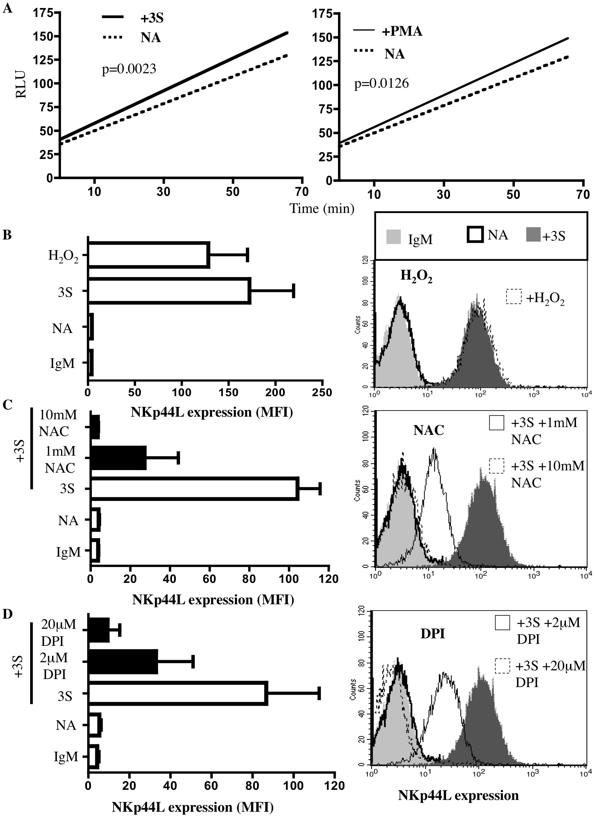 3S peptide stimulation induces ROS production by NADPH oxidase.