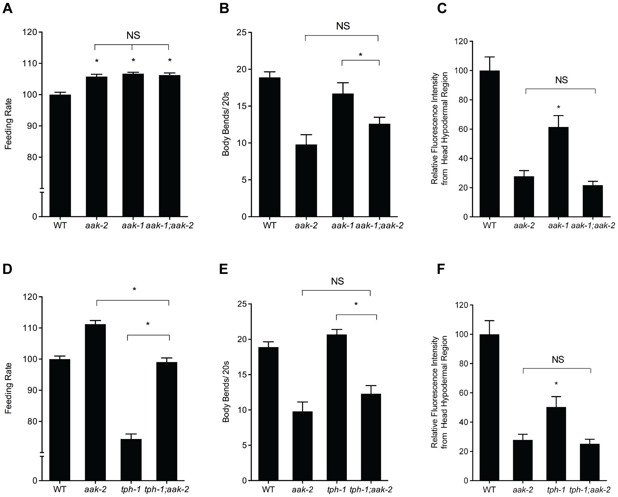 Effects of losses of <i>aak-1</i> and <i>tph-1</i> on <i>aak-2</i> mutant phenotypes.