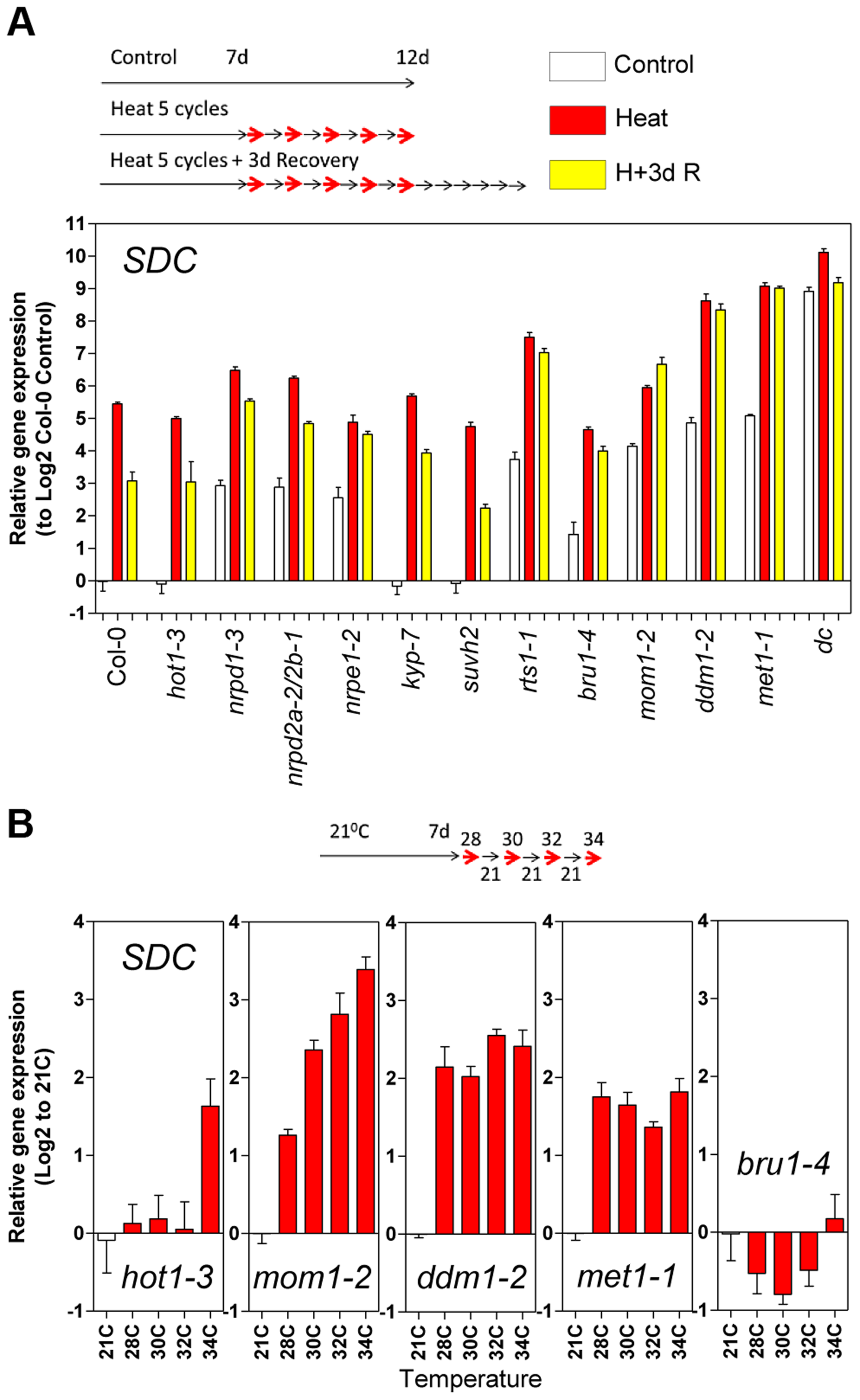 Epigenetic regulation of heat-induced <i>SDC</i> release from silencing.