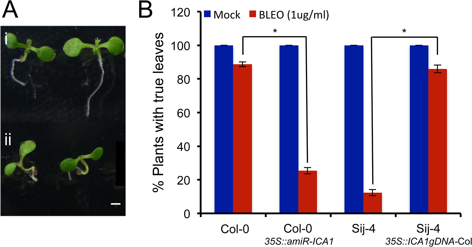 Sij-4 plants are hypersensitive to DNA damage.