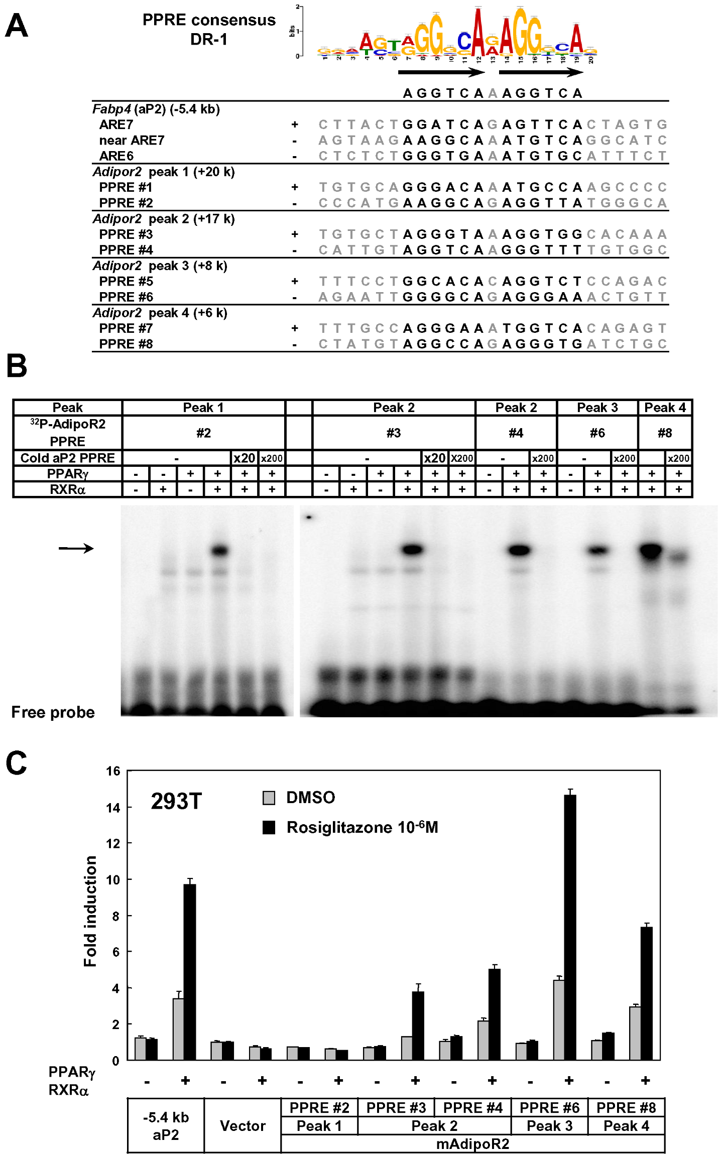 Identification of functional regulatory elements in the intron 1 of <i>Adipor2</i>.