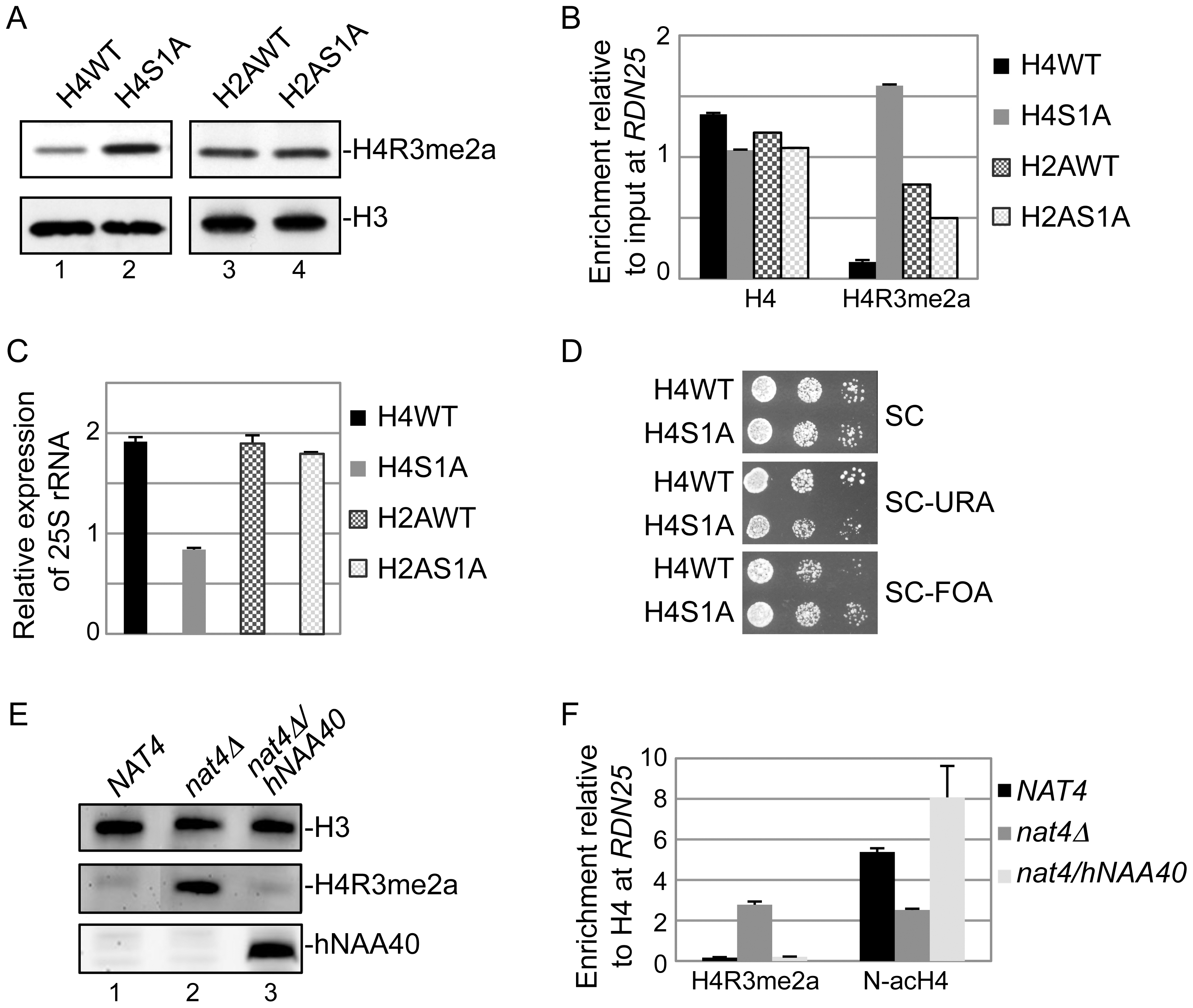 Nat4 inhibits rDNA silencing and H4R3me2a through N-terminal acetylation of H4.